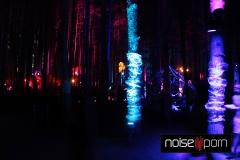 Forest-Night-EF