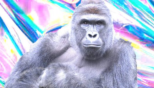 Harambe Hologram to be Featured at Day For Night Festival