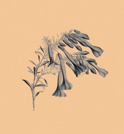 floret-loret